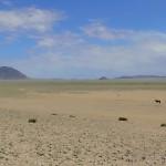 CopyrightIngeOhm_Feral_horses_in_Namib_Desert