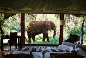 Elephant outside suite