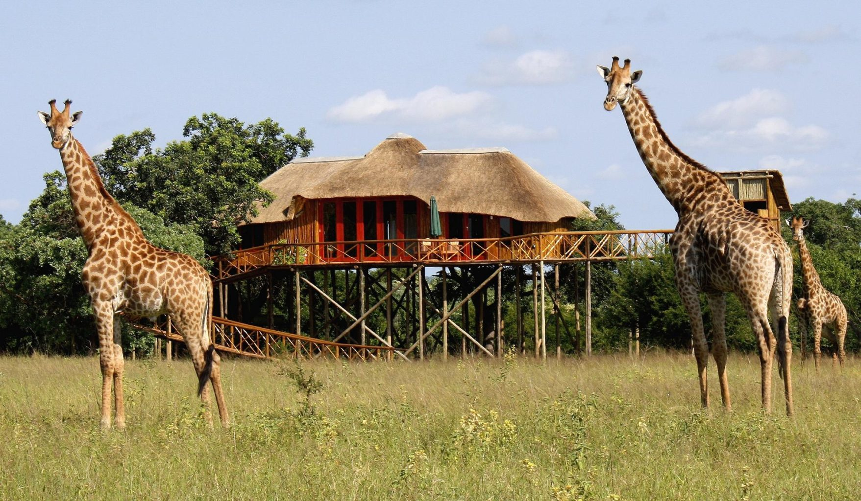 Pezulu Tree House Game Lodge African Solutions