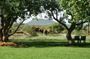 trees & waterhole